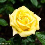 A simple bloom