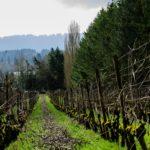 He said to them, 'Work in my vineyard.' Matthew 20:7b